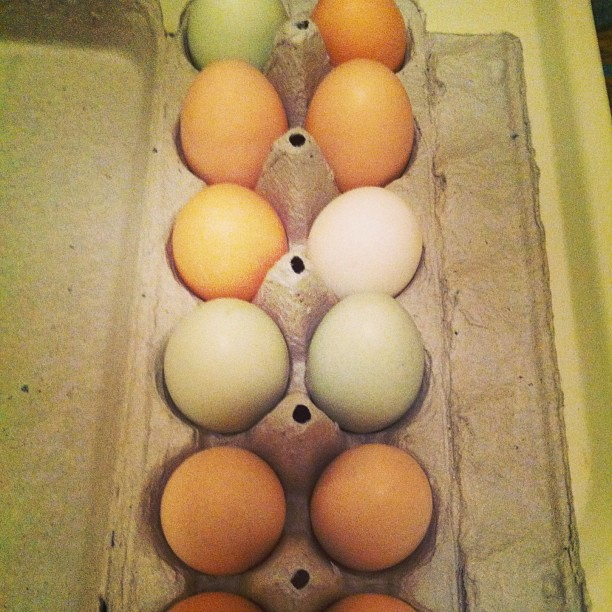 Eggs Galore